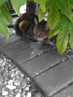 Cat under Shrub by violets-are-red