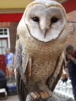 African Spotted Barn Owl 2 by Tiarna