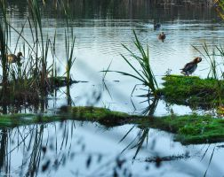 Water Fowl Park III by Brian-B-Photography