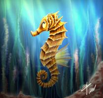 Sea Horse by timwell