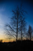 Tree at Sunset by keithajb