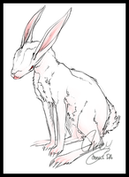 Crooked rabbit. by rhoeas
