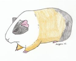 A Little Guinea Pig by Anjellyjoy