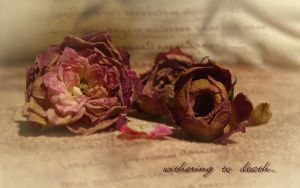 withering roses by hotaru-tenten
