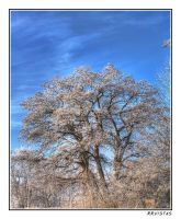 frosted tree by RRVISTAS