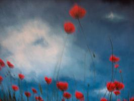 Blurred Poppies by Jellydancer