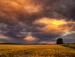 Summer wheatlands pt.XI. by realityDream