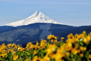 Flowering Mt. Hood by abstractxpressions