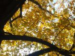 Golden Canopy by Dgastin