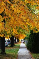 Autumn in Winnipeg by Joe-Lynn-Design