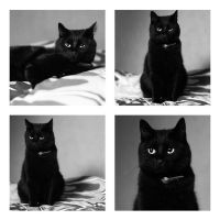 cat in black by BmolPhotography