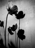 Shadows of flowers by AmandaBlack