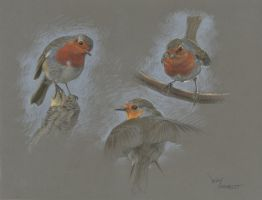 Robin attitude : Pastel pencils on Pastelmat paper by wimke