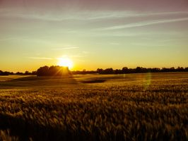 Sunset Spring 2012 by v0t3x-photography