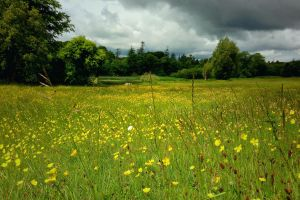 Storm approaching the Field of Yellow Flowers by Destroth