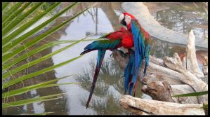 Arizona 2011 - Parrots by DarlingMionette