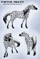 Viktor Bravo the Araloosa stallion by pookyhorse
