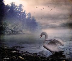 The Swan by jhutter