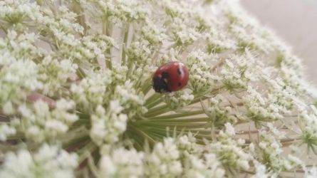 Little ladybug by loveautumnandnature