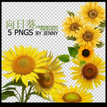 sunflower PNGS by jenny-F