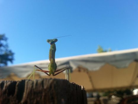 Camping - Mantis - 3 by Clivvellusion