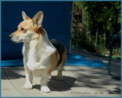 Leo two years old by Cmac13