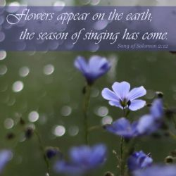 Song of Solomon 2:12 by CrystalAnnePhotos