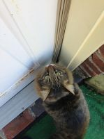 let me in!!!! by iluvgrey