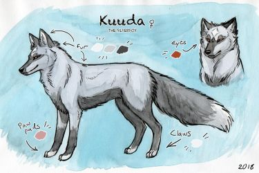 Kuuda - Feral reference sheet 2018 by Kuuda