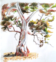 Tree study by Brysiaa