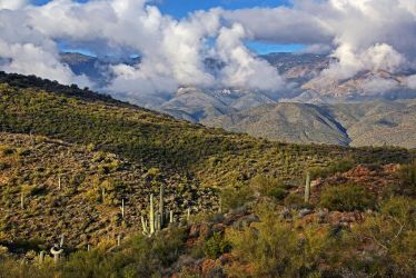 Saguarros and Mountains by papatheo