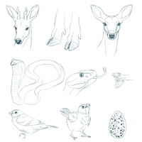 Animal Sketches by PaintedPeaches