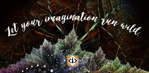 Wild-imagination by Patchco