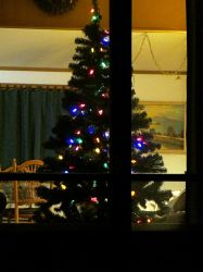 Christmas Tree I by dull-stock