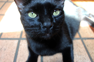 Binx by Constantine-Woodhull