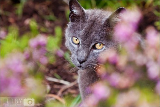 Hiding In The Flowers by ILTBY