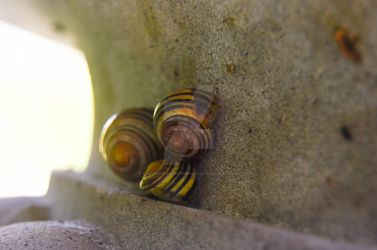 Snails by NightshadeCreepypasa