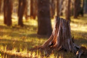 stump by P0RG