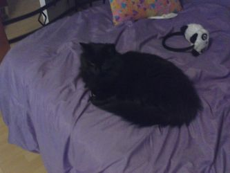 my cat on my bed XD by oceanepelchat