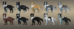Border collie adoptables [10/10 is open] by Mossasaurus