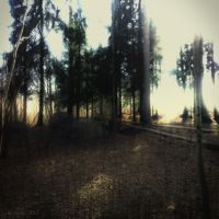 Forest 10 by Amalus