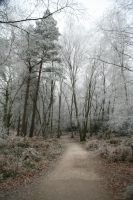 Stock : Winter Woodland Path by Ange1ica-Stock