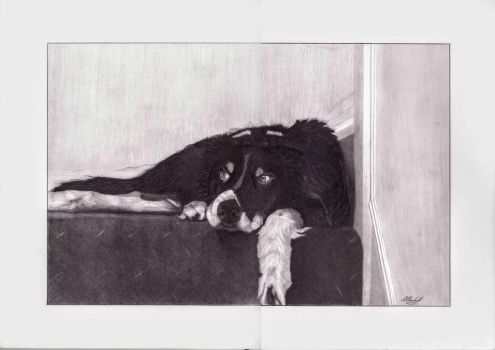 [graphite] Jack the Border Collie by mchurchill1982