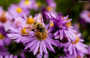 Worker Bee by Bozzenheim