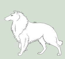 Rough Collie Lines by J-Dove