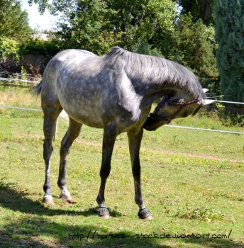 Calabria - Stock 1 by Horses--Stock