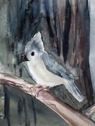 Tufted Titmouse in Watercolor by HaleyGottardo