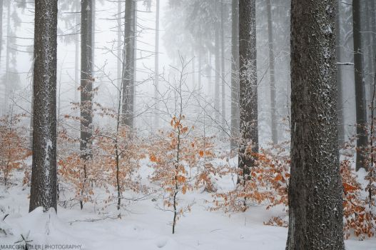 Cold Paradise by MarcoHeisler