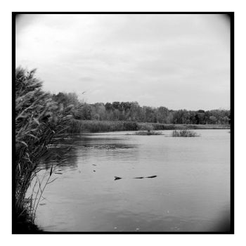 2017-310 Quaker Pond, south end by pearwood