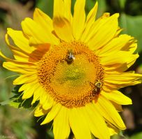 Don't Worry,-Bee- Happy by Brian-B-Photography